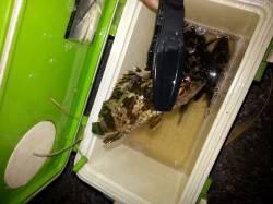 岡田浦漁港 ガシラが連続ヒット、魚を通じて冬を感じ十分楽しめました☆