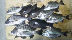 日高川河口 フカセでチヌ狙い釣行、アタリも多く楽しめました!