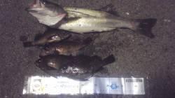 谷川漁港など岬町内をランガンしてナイスサイズのメバル