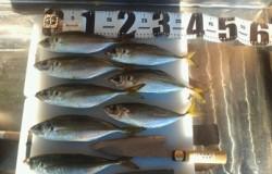 和歌山マリーナシティ カゴ釣りでのアジ狙いはワームに好反応