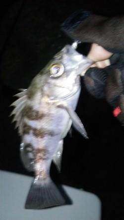 釣り初めに尾崎漁港でプラッキング 宙層~ボトムを丁寧に攻め今年初メバル!