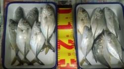 和歌山マリーナシティ周辺 ルアーに反応するメッキを探して釣りました