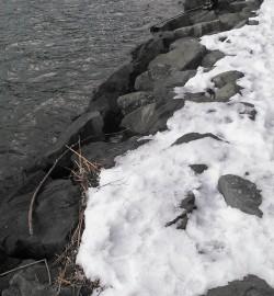 津居山 フカセ釣りで良型チヌ連発☆ ビギナーズラックの53cmもゲット!