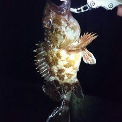 チニング諦めてのガシラ大漁