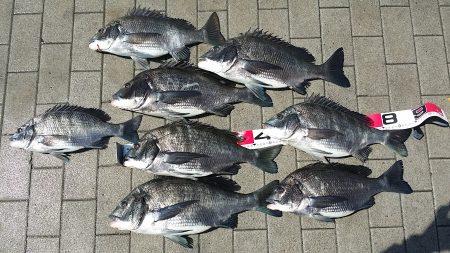 今日は3人でチヌ釣り!