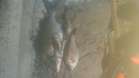 2週間ぶりの釣りですが‥…………