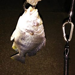 チニング釣もなかなか