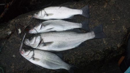 河口にてルアー釣り