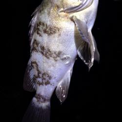 釣りビギナーメバルマスターです。泉南エリアランガン