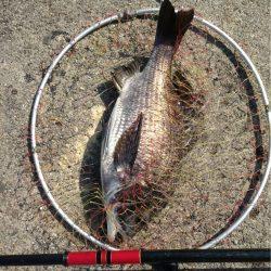 久々フカセ釣り