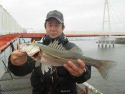 尼崎市立魚つり公園 ハネ・セイゴの活性上がってます