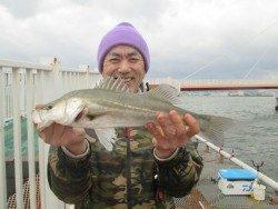 尼崎市立魚つり公園 ウキからズボ釣りへ変更して待望のハネゲット