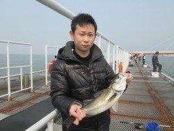 尼崎市魚つり公園 ハネ&セイゴの釣果