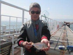 尼崎市立魚つり公園 ハネとウミタナゴの釣果