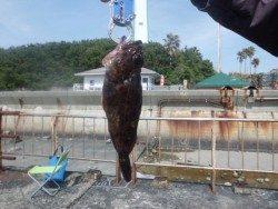 大阪南港海釣り公園 ガシラとチヌの釣果