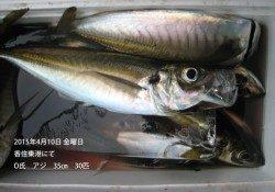 香住東港にて良型アジの釣果