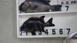 周参見沖磯 石鯛63.8cm 4.07kg