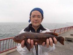 神戸市立平磯海づり公園 39cmのポン級アイナメ