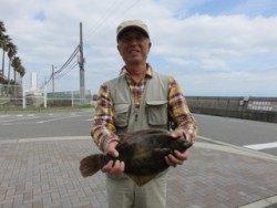 平磯海釣り公園 投げ釣りでカレイ40cm