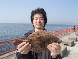 平磯海釣り公園 投げ釣りでカレイ36.5cm