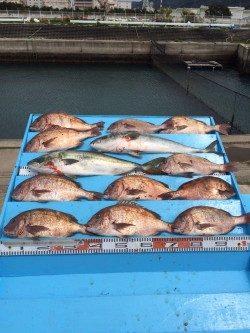 和歌山マリーナシティ海洋釣り堀 メジロ・マダイのいい感触味わいました!