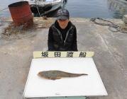 黒島の筏 のませで良型マゴチ