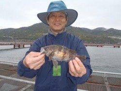 神戸市立須磨海づり公園 イカナゴでメバルが釣れています