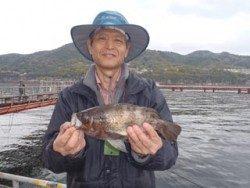 神戸市立須磨海づり公園 イカナゴをエサにメバルメバル29.6cm