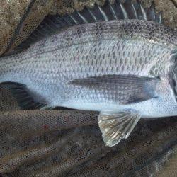 河口にてフカセ釣り