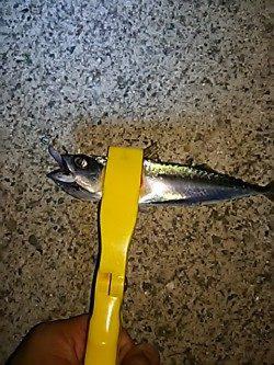 魚は、元気です。