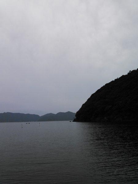 ケンサキイカ