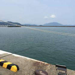 小浜港のサビキ釣り
