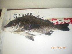 姫路市立遊漁センター 探り釣りで魚種多彩に楽しめる