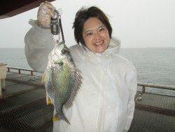 尼崎市立魚つり公園 サビキでキビレほか