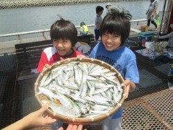 尼崎市立魚つり公園 サビキで嬉しい魚種が出始めました