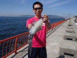 神戸市立平磯海づり公園 グリーンのエギ4号でアオリイカ♪