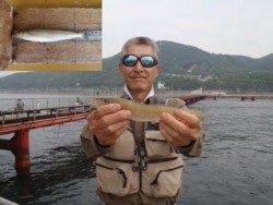 キス記録賞!神須磨海づり公園で投げ釣り