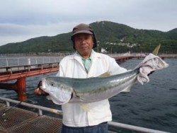 神戸市立須磨海づり公園 ノマセでブリ91.5cm!