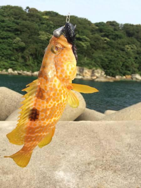 ロックフィッシュ・フラットフィッシュ釣行in竹野