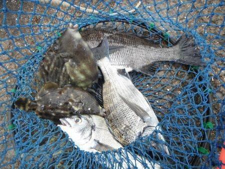 和歌山北港魚つり公園 チヌ、カワハギ