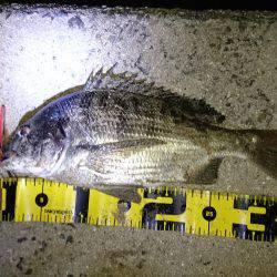 沼隈にてボンボンチヌ | 広島 | 釣果情報 堤防 ジギング 船釣 管理釣り場 釣り情報 | カンパリ全国版