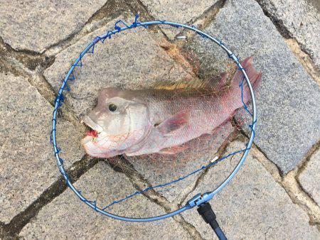 チニング、投げ釣り
