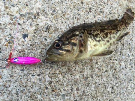 癒しの釣り | 宮城 | 釣果情報 堤防 ジギング 船釣 管理釣り場 釣り情報 | カンパリ全国版