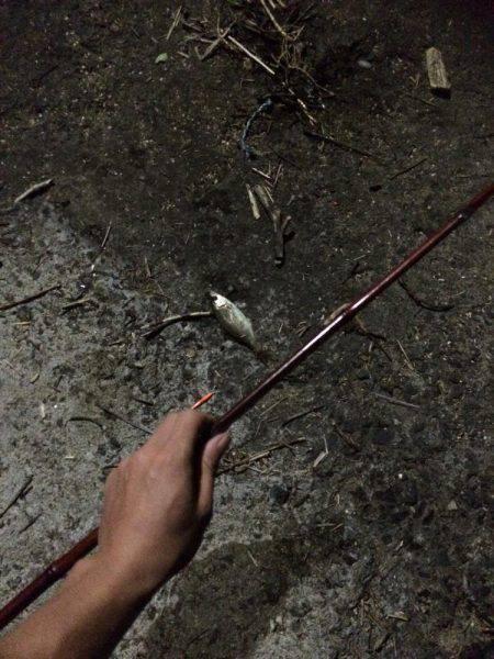 ファミリーフィッシング 夜編 | 岩手 | 釣果情報 堤防 ジギング 船釣 管理釣り場 釣り情報 | カンパリ全国版
