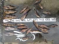 北島渡船 釣果 | 青森 | 釣果情報 堤防 ジギング 船釣 管理釣り場 釣り情報 | カンパリ全国版