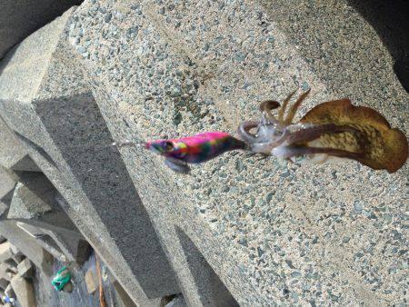 イカの大群   福岡   釣果情報 堤防 ジギング 船釣 管理釣り場 釣り情報   カンパリ全国版