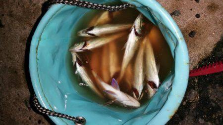 土曜日の大潮 | 福岡 | 釣果情報 堤防 ジギング 船釣 管理釣り場 釣り情報 | カンパリ全国版