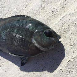 港遊び | 宮城 | 釣果情報 堤防 ジギング 船釣 管理釣り場 釣り情報 | カンパリ全国版