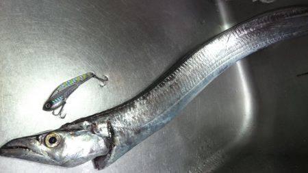 外道太刀魚