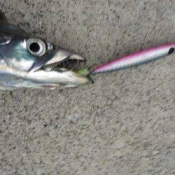 ハードルアー太刀魚楽しい〜